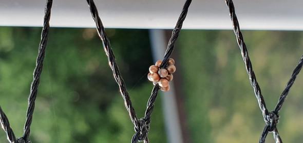 Was sind das für seltsame Eier auf dem Balkon?