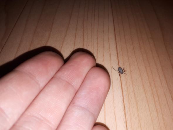 Was Sind Das Fur Spinnen Beim Tannenbaum Tiere Insekten Parasiten