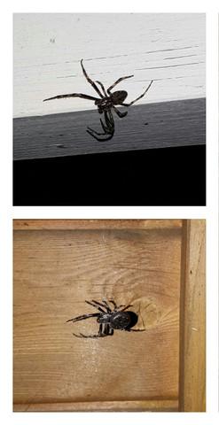 M.E. nicht schön  - (Spinnen, gefährlich)