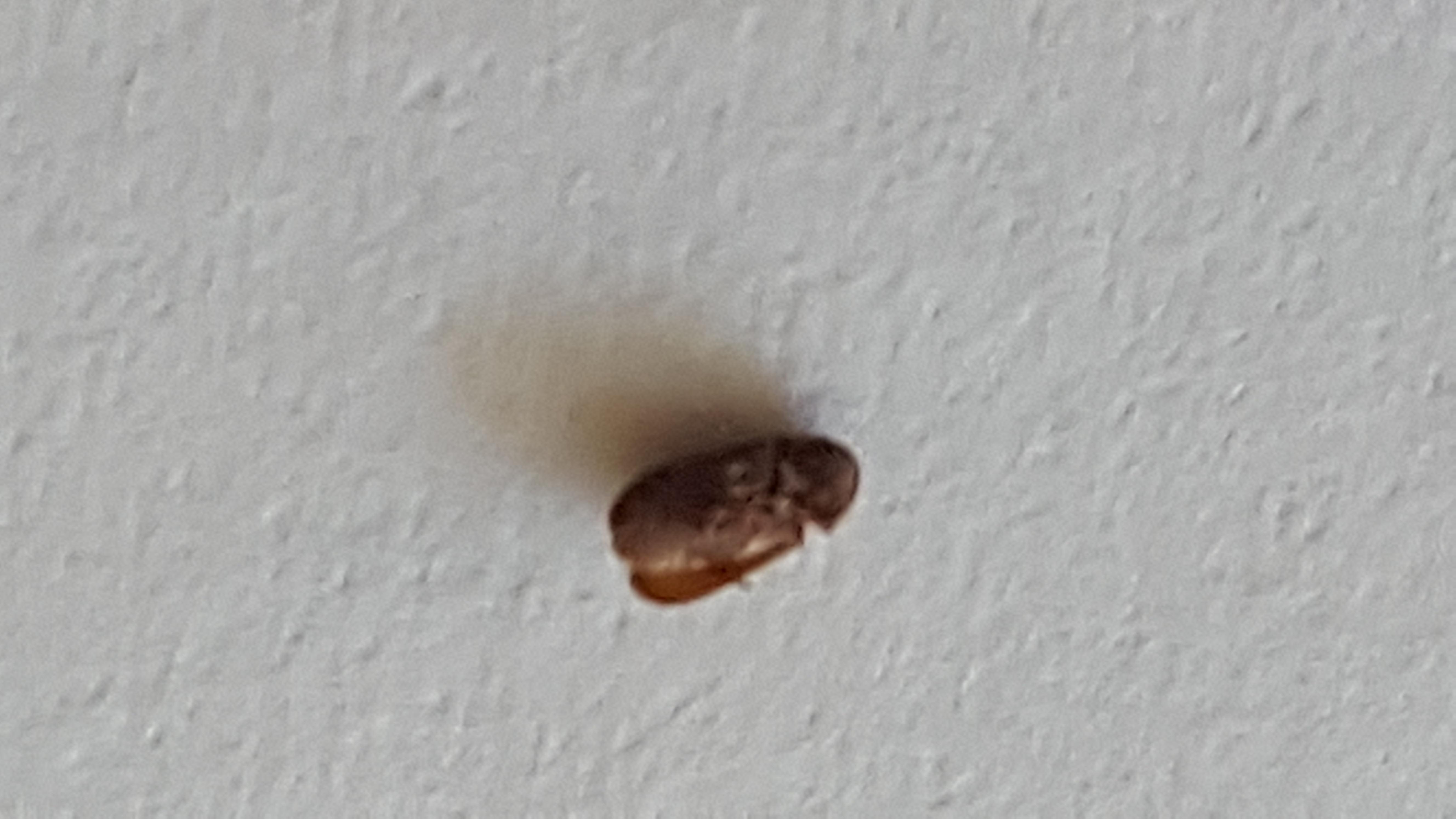 Was sind das f r tierchen auf der fensterbank tiere for Fliegen in blumenerde vernichten