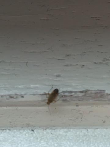Die sind vielleicht doppelt so groß wie Fruchtfliegen  - (Natur, Insekten, Mückenstiche)
