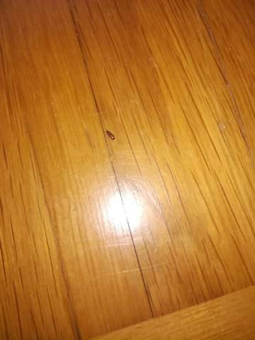 Was sind das für Tierchen Käfer an der Wand  und am Boden?