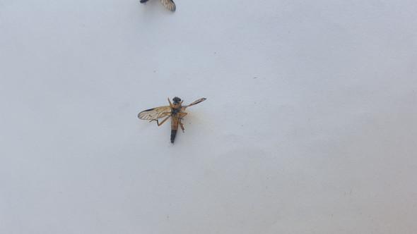 Was sind das für Tiere/Insekten, stechen die?