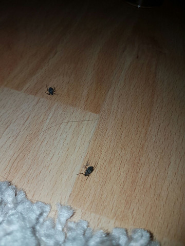 Bild2 - (Käfer, Ungeziefer, Weihnachtsbaum)