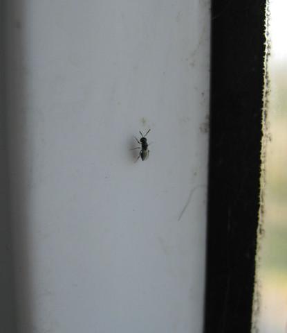 Krabbeltier1 - (fliegen, Insekten, Kaefer)