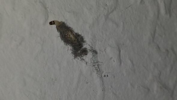 was sind das f r viecher wo kommen sie her wie vernichte ich sie tiere insekten. Black Bedroom Furniture Sets. Home Design Ideas
