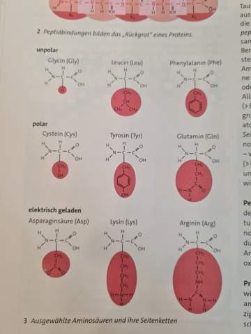 Was sind die typischen Enzymeigenschaften?