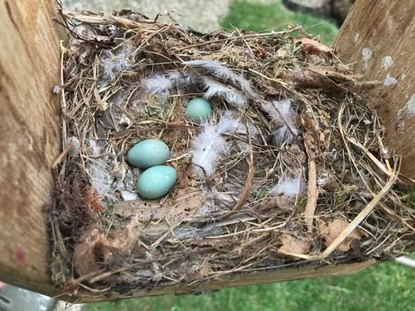 Was sind Hauptgründe für das Verlassen des Nestes (Vögel)?
