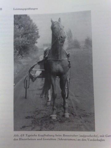 Schrotriemen - (Pferde, reiten, Sattel)