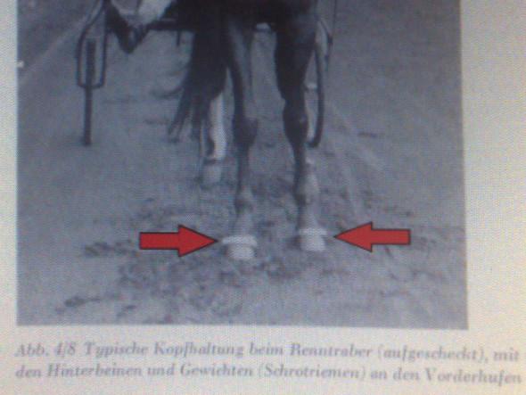 Schrotriemen 2 - (Pferde, reiten, Sattel)