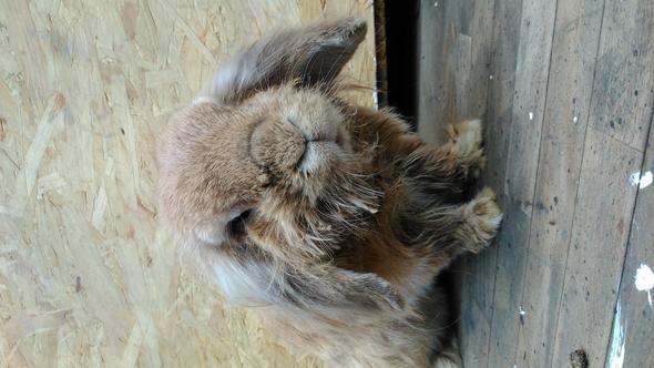 kaninchen - (Kaninchen, nass)