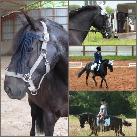 billy - (Pferde, reiten, Kunst)