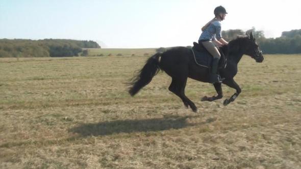 billy2 - (Pferde, reiten, Kunst)