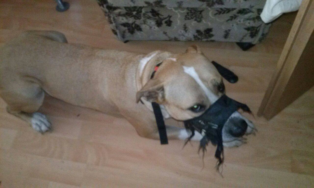 was soll ich tun wenn mein hund alleine ist zerst rt er alles was er ins maul bekommt. Black Bedroom Furniture Sets. Home Design Ideas