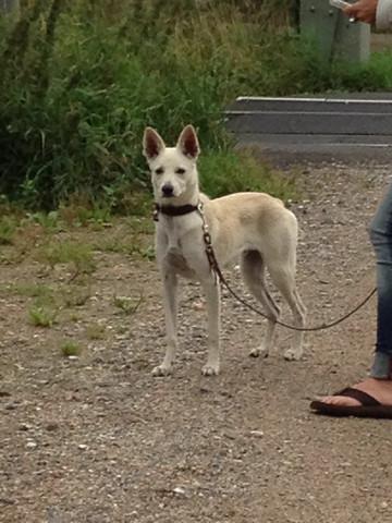 Moritz 1 - (Hund, Hunderassen)