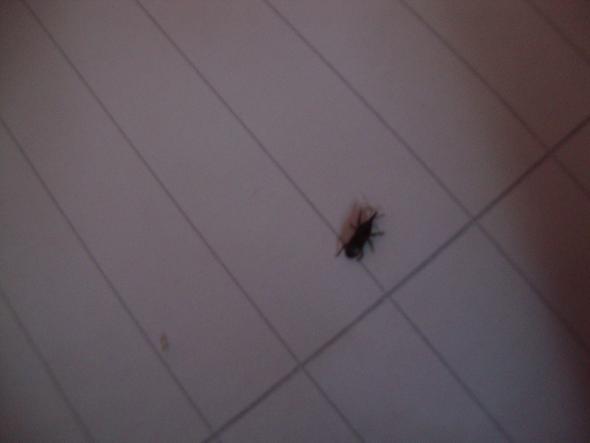 Das Insekt - (Wohnung, Insekten, putzen)