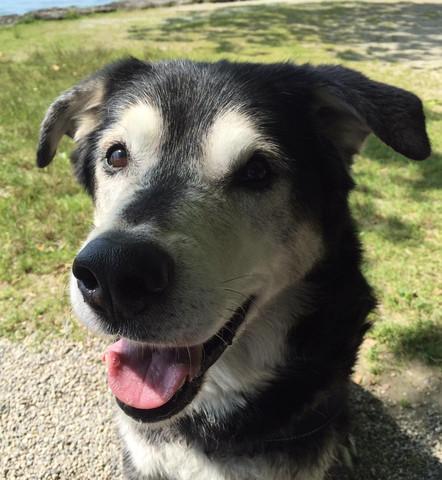Das ist Linus - (Krankheit, Hund, Tierhaltung)