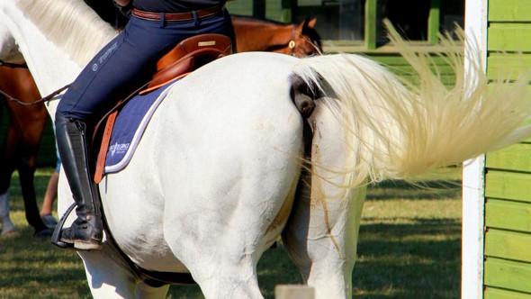 Was tun bei Kotwasser-/Durchfallproblem (Pferd)?