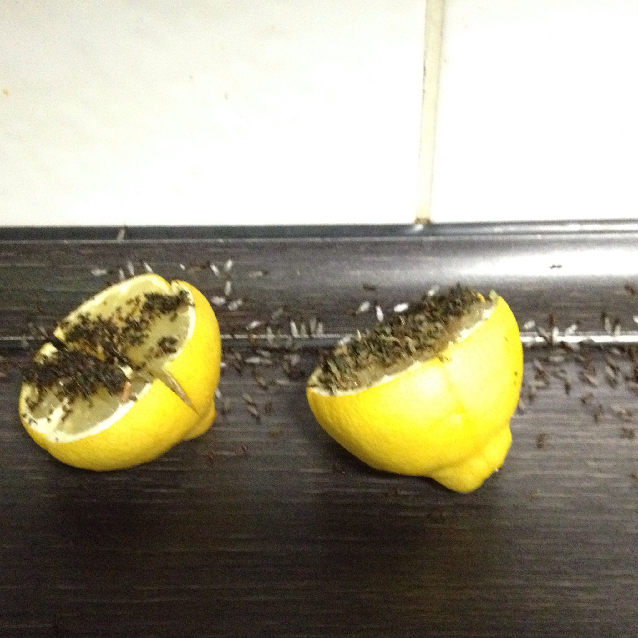 Was Tun Gegen Ameisen In Der Küche Was Tun Gegen Fliegen/Ameisen? (Haus