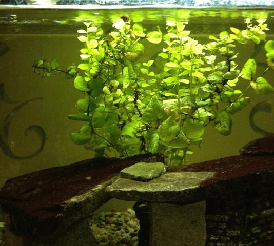 was tun gegen kleine posth rnchen schnecken im aquarium aquaristik. Black Bedroom Furniture Sets. Home Design Ideas