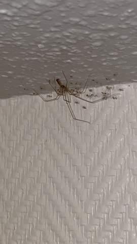 Was tun gegen Spinnenbabys?