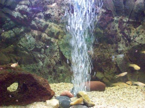 Mein Aquarium - (Fische, Aquarium, guppy)