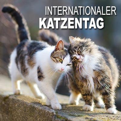 Katzentag - (Katze, Katzen)
