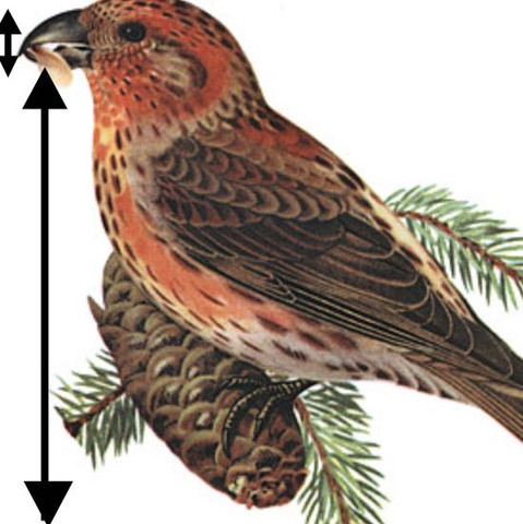 Als Beispiel - (Biologie, Vögel, Krallen)