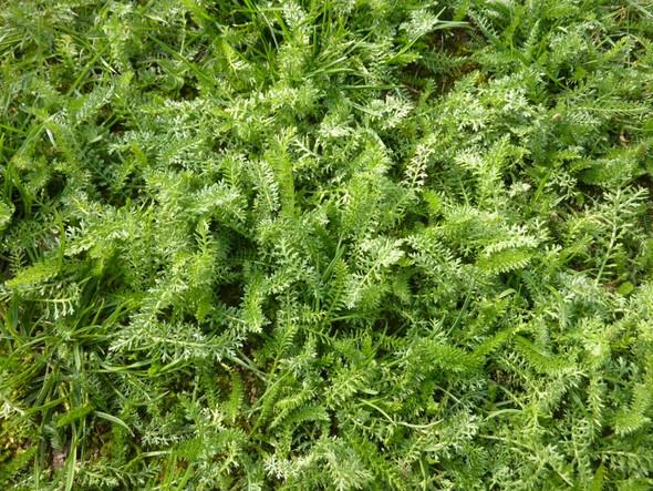 Was wächst da im Rasen?