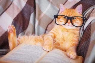 Was war das letzte was du gelesen hast 📖?