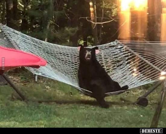 Was würdest du machen wenn bei dir ein Bär so dasitzen würde?