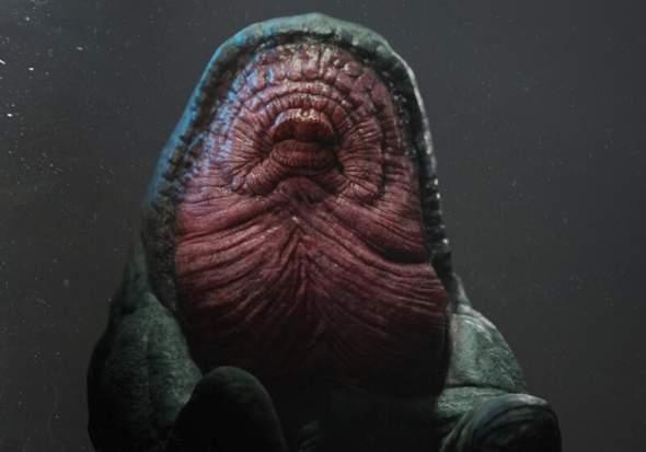 Was würdest du machen wenn du dieser Kreatur begegnen würdest?