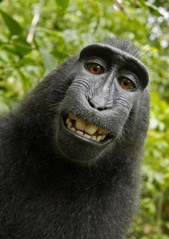 Höhö:'D - (Tiere, Affen)