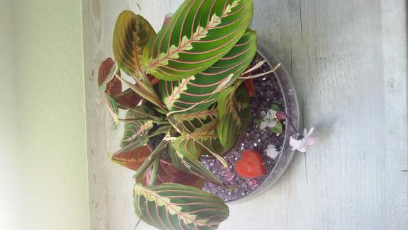 Die fragliche Pflanze  - (Pflanzen, Botanik)