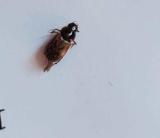Waß ist das für ein Käfer ?
