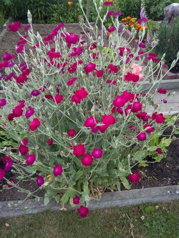 Was ist das?  - (Biologie, Pflanzen, Blumen)
