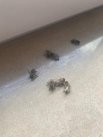 Wass machen wenn es Bienen sind?