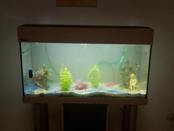 versuch das trübe einzufangen - (Fische, Aquarium)