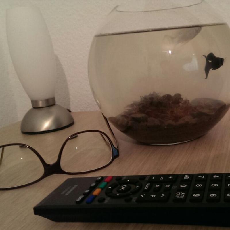 wasser immernoch tr b nach 2 tagen fische aquarium. Black Bedroom Furniture Sets. Home Design Ideas