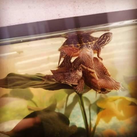 Wasserschildkröten und Fische (Barsche)?