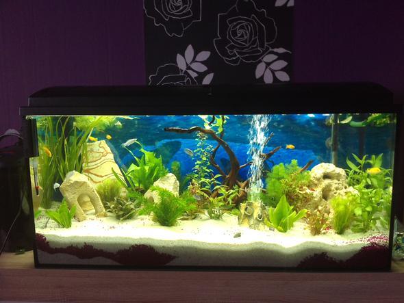 wasserschildkr ten und fische zusammen im aquarium. Black Bedroom Furniture Sets. Home Design Ideas