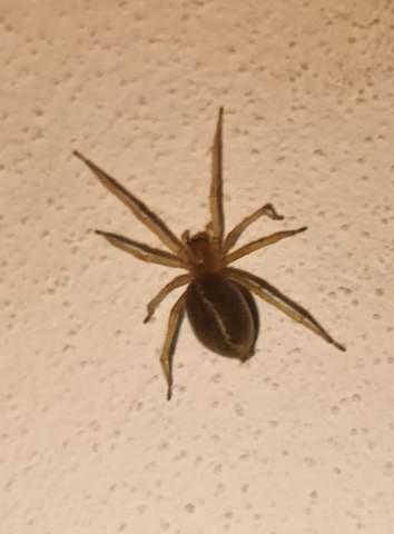 Wie heisst diese Spinne?