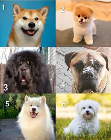 - (Tiere, Umfrage, Hund)