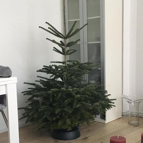 Weihnachtsbaum zu dick, schneiden stutzen möglich?