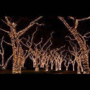 Weihnachtsbeleuchtung au en wie auf bild wie - Weihnachtsbeleuchtung garten ...