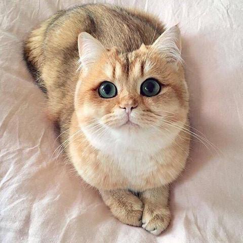 Hey Leute , wisst ihr vielleicht welche Rasse diese Katze haben könnte? - (Katze, Rasse)