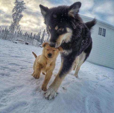 Besagter Hund - (Tiere, Hund, Hunderasse)