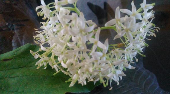 Blüte - (Pflanzen, Natur, Blumen)