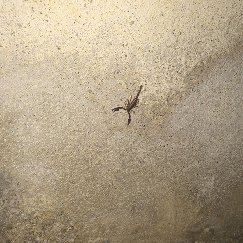 Hier der skorpion - (Tiere, Gift, Spinne)