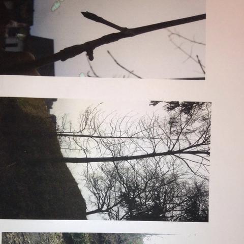 Bild 1 - (Natur, Baum, grün)